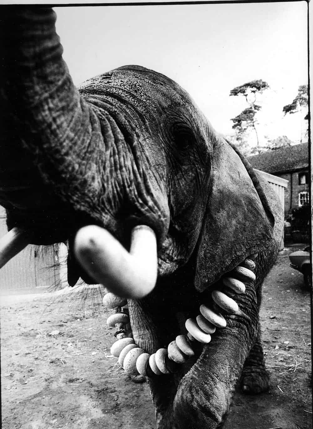 Elephant Necklace Breda Haugh Jewellery Design Blog
